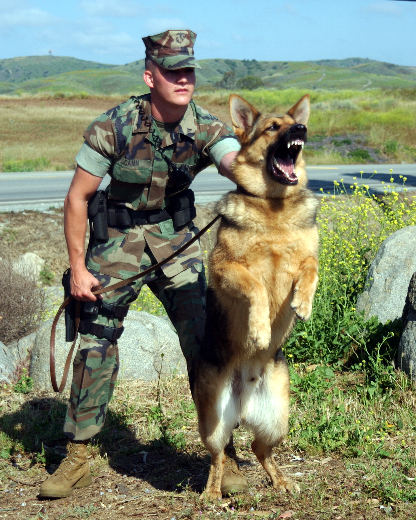 k9 page